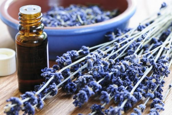 first-choice-chiropractic-of-northville-lavender-essential-oil